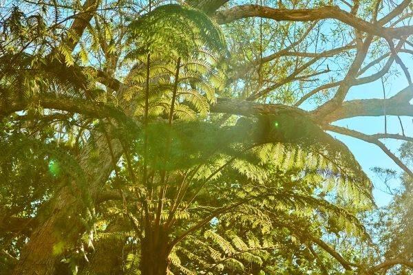 visiter la Réunion en vacances Foret de Bébour